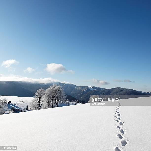Trail of footprints walking in snow