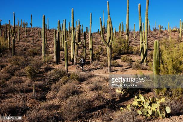 trail riding among saguaros - desert stock pictures, royalty-free photos & images
