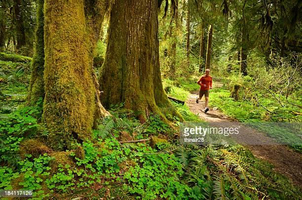 Trail runner im Wald