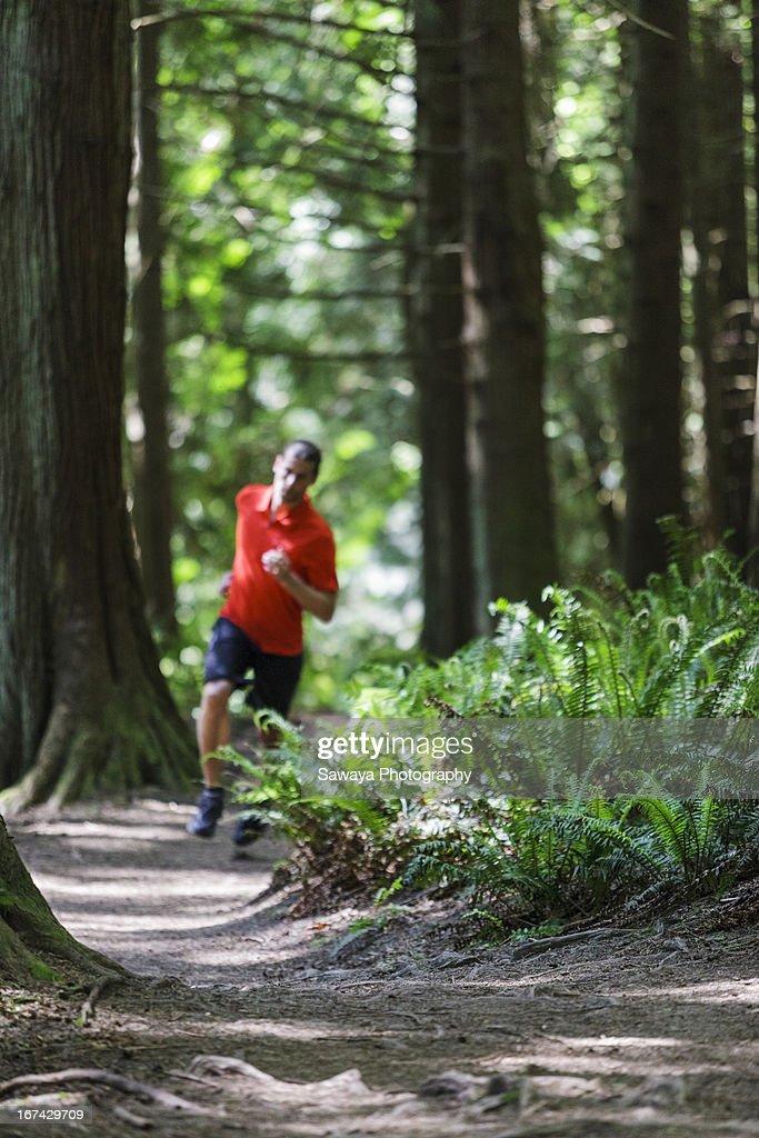 Trail running in evergreen forest : Foto de stock