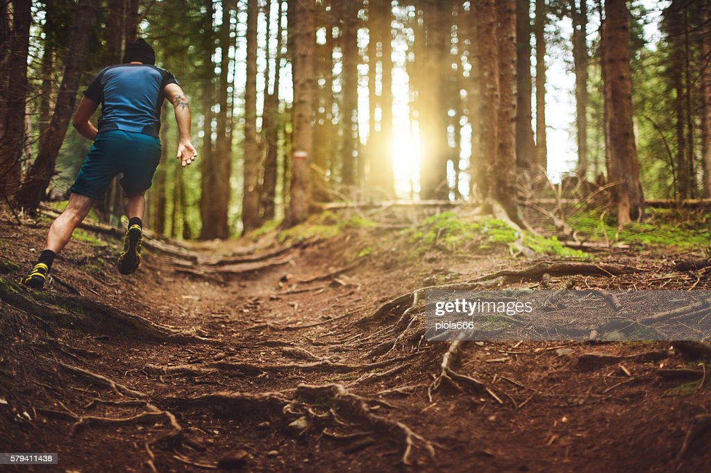 Trail running in the forest : Stock Photo