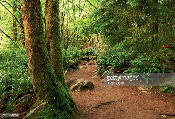 trail through rainforest in lynn canyon - lush stock pictures, royalty-free photos & images