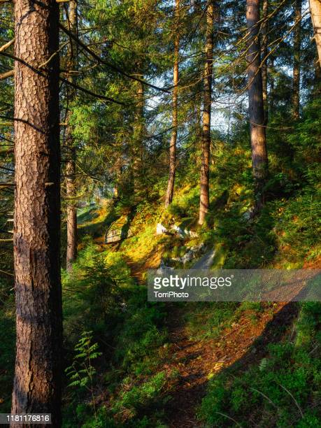 trail through summer forest - ukraine landscape stock pictures, royalty-free photos & images