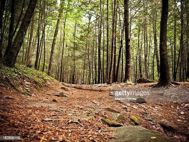 Sentier à travers la forêt.