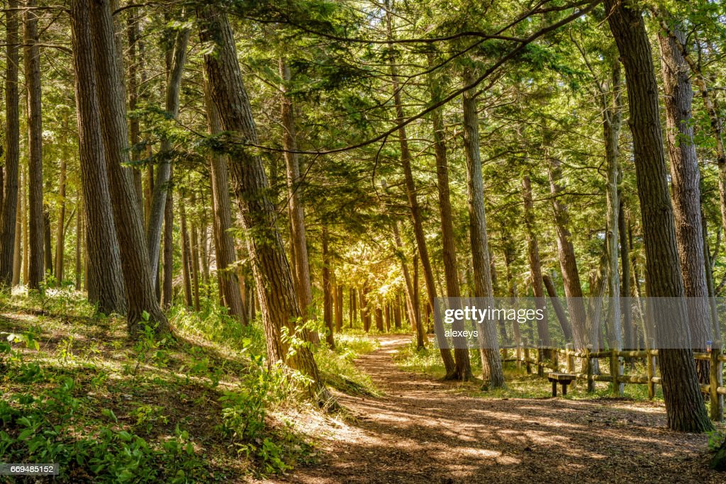Trail through the woods : Stock Photo