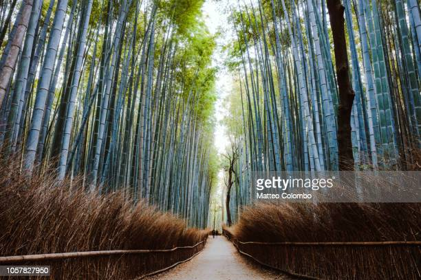 Trail to famous bamboo grove, Kyoto, Japan