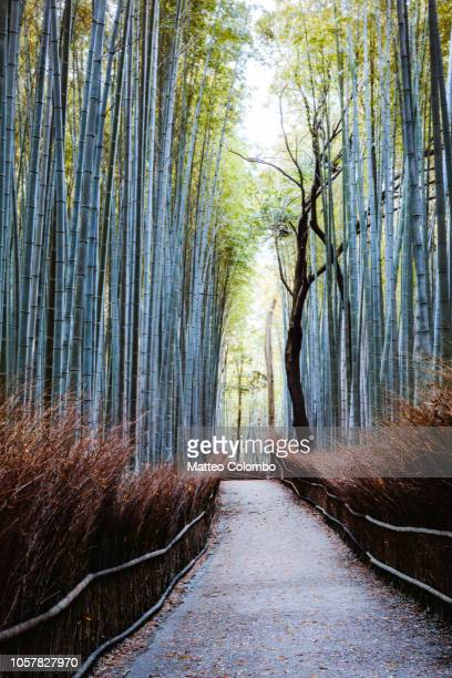 trail to famous bamboo grove, kyoto, japan - grove_(nature) stock pictures, royalty-free photos & images