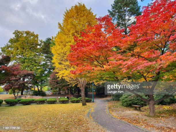 a trail with autumn color - sungjin kim stock pictures, royalty-free photos & images