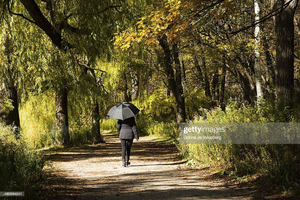 Trail with Autumn Colour : Stock Photo