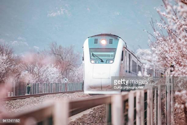 train and sakura trees at beijing, china - 高速列車 ストックフォトと画像