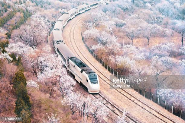 train passing through the spring landscape - peach flower stock pictures, royalty-free photos & images
