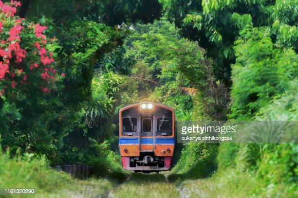 train running in tree tunnel on the railway in bangkok thailand. - ウクライナ トンネル ストックフォトと画像