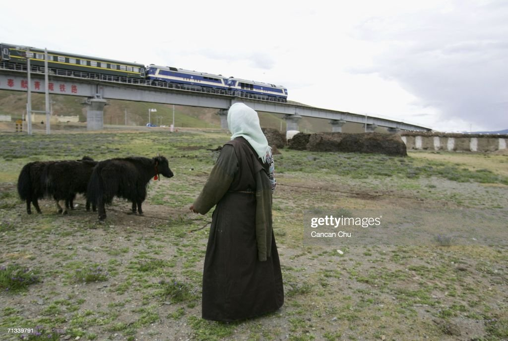 A train runs on the newly built Qinghai-Tibet Railway past a village as a Tibetan woman looks after her cows in Dangxiong County, Tibetan Autonomous Region, China on June 30, 2006. The Qinghai-Tibet railway will begin trial operations on July 1, a schedule has been set for the first five trains to Tibet via the new railway, an official with the Qinghai-Tibet Railway Company said. The 1,956-kilometer-long (1,215 miles) Qinghai-Tibet railway, linking Xining, capital of Qinghai Province, with Lhasa, capital of Tibet Autonomous Region, is the world's highest and longest plateau railroad and also the first railway connecting Tibet with other parts of China. Some 960 kilometers (576 miles) of its track are located 4,000 meters (13,120 feet) above sea level and the highest point is 5,072 meters (16,636 feet), according to state media.