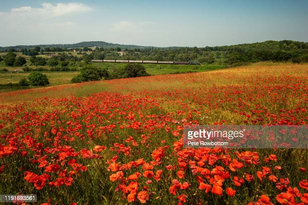 train through the poppies - west midlands stock pictures, royalty-free photos & images