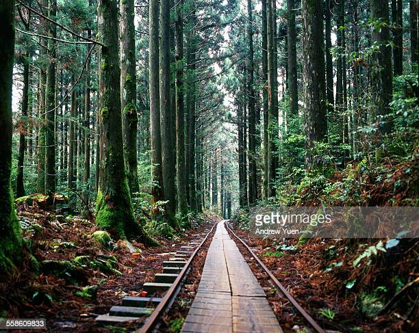 train tracks in the forest - 鹿児島県 ストックフォトと画像