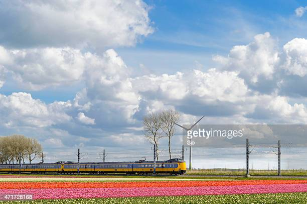 NS Train with Tulip fields on a beautiful spring day