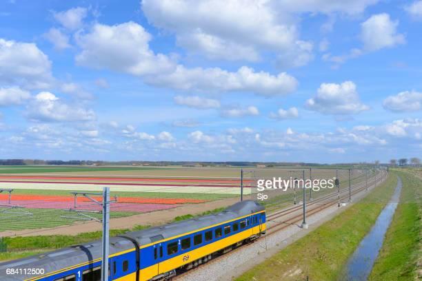 trainen met tulpenvelden op een mooie lentedag - flevoland stockfoto's en -beelden