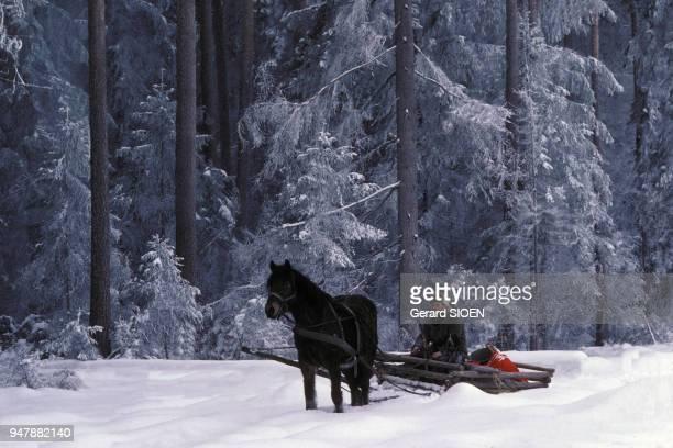 Traineau tiré par un cheval en Mazurie en mars 1980 Pologne