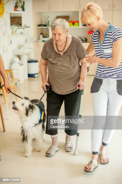 Trained Dog Helping Senior Woman To Keep Stability While Walking