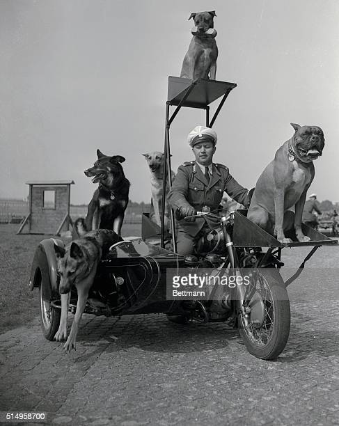 Trained police dogs demonstrate excellent discipline and coordination as they perform from a specially rigged motorcycle The dogs were among the acts...