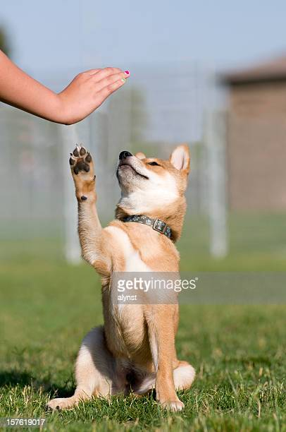 Trained Puppy Gives High Five