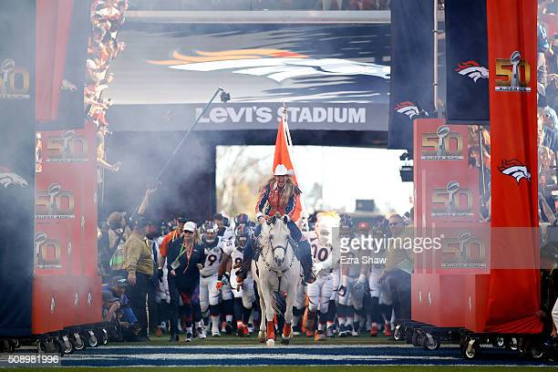 Trainer Ann JudgeWegener rides Denver Broncos mascot Thunder on to the field before Super Bowl 50 against the Carolina Panthers at Levi's Stadium on...