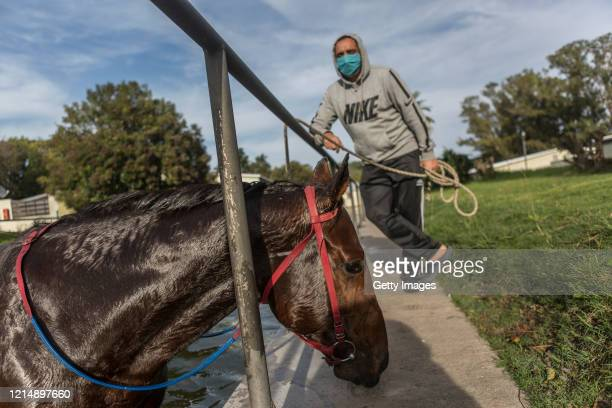 A trainer bathes his horse in a pond after prerace training during competition day as Uruguay slowly returns to normal due to coronavirus outbreak at...