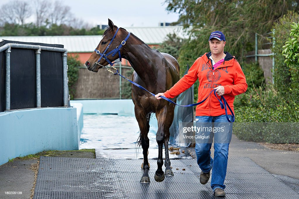Trainer Danny O'Brien takes 3yr old Tear Gas for swim at Flemington Racecourse on September 10, 2013 in Melbourne, Australia.