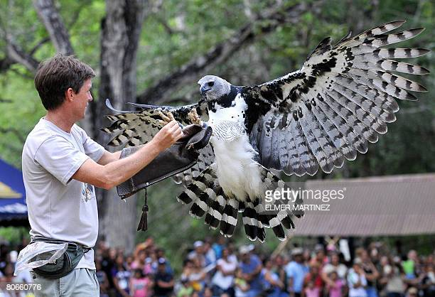 A trainer feeds Luigi an adult male Harpy eagle born and raised in captivity at the National Association for the Conservation of Nature some 18 km...