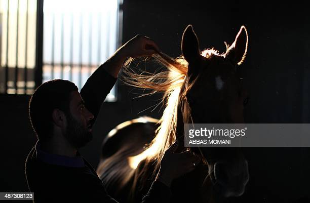 60 Top Horse Sex Pictures, Photos and Images - Getty Images