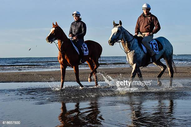 Trainer Matt Cumani on Grey Lion and Francesca Cumani on Gallic Chieftain exercise at Altona Beach on October 28 2016 in Altona Australia