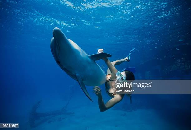 trainer swimming with dolphin - eilat stock pictures, royalty-free photos & images