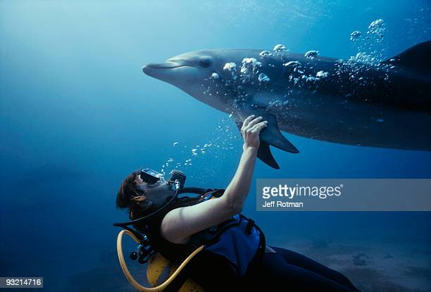 Trainer swimming with dolphin