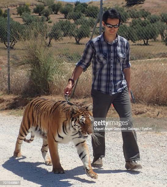 Trainer With Tiger At Zoo