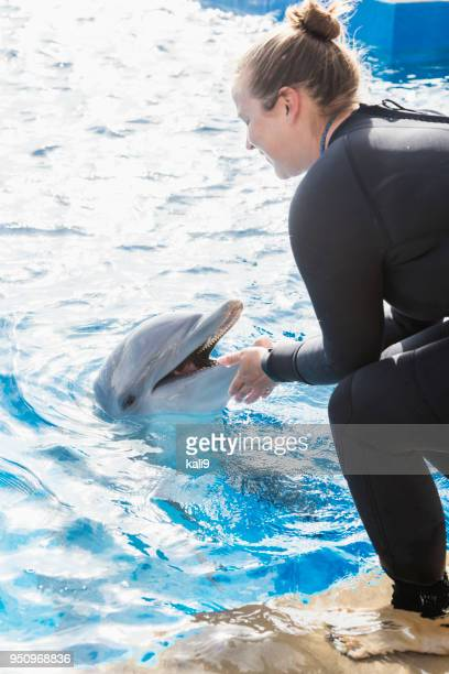 Trainer working with dolphin