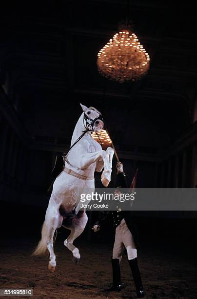 A trainer works with a lipizzaner during a performance at the Spanish Riding school This riding school building was created by the Hapsburg Emperors...
