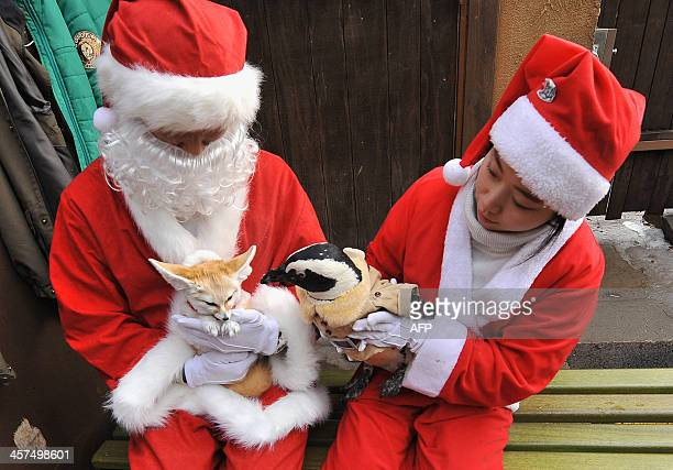 Trainers dressed Santa Claus costumes take care of a penguin and a fennec fox dressed in costumes for a promotional event at an amusement park ahead...