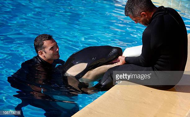 Trainers feed milk on October 20 2010 to a oneweek old orca born in LoroParque Zoo on the Spanish canary island of Tenerife Kohana the new mother is...