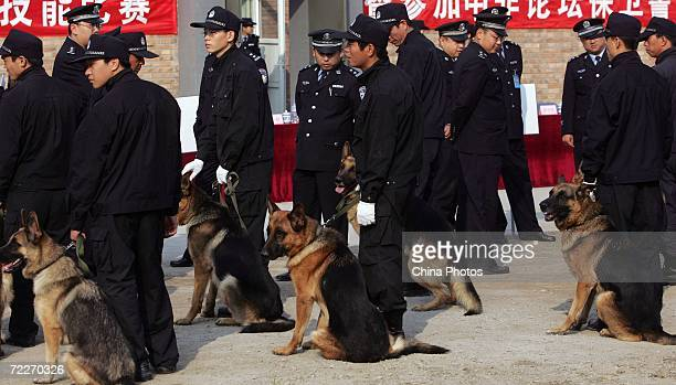 Trainers wait with police canines at a police dog training base October 26 2006 in Beijing China Police sources said the dogs for the Olympic...