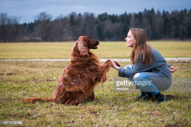 training dog - canine stock pictures, royalty-free photos & images