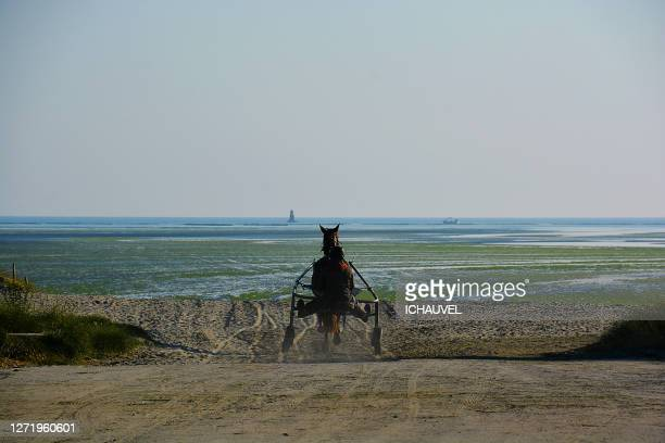 training horse brittany france - green algae ストックフォトと画像