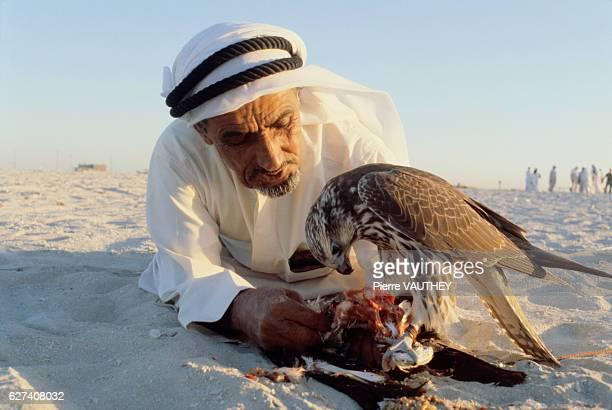 Training Hunting Falcons in Dubai