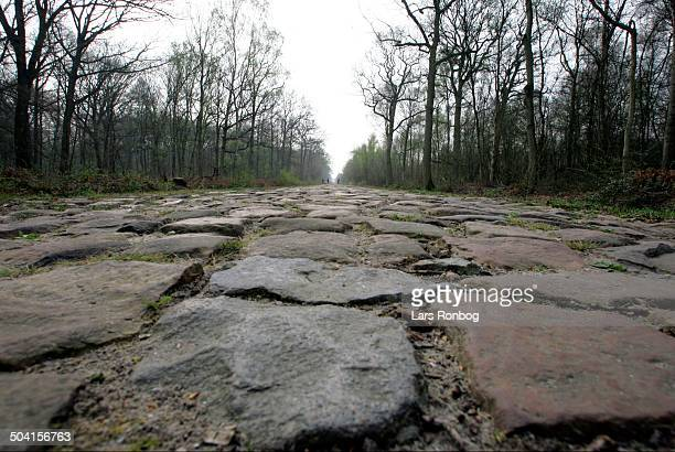 Training in the Arenberg Forest before Paris - Roubaix - the Pavees