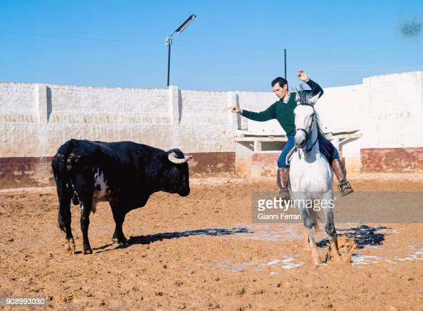 Training of the Spanish mounted bullfighter Angel Peralta Sevilla Spain