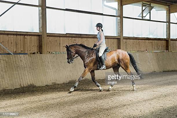 training - paardrijden stockfoto's en -beelden