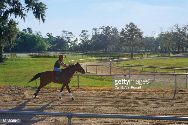 Training Race Horse
