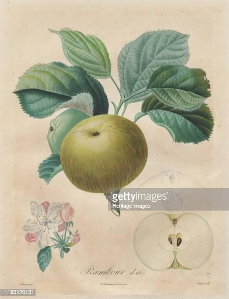 Rambour dété 18081835 Creator Henri Louis Duhamel du Monceau