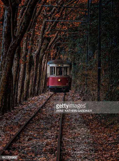 tram passing through autumnal tree alley in sintra, portugal. - sintra stock pictures, royalty-free photos & images