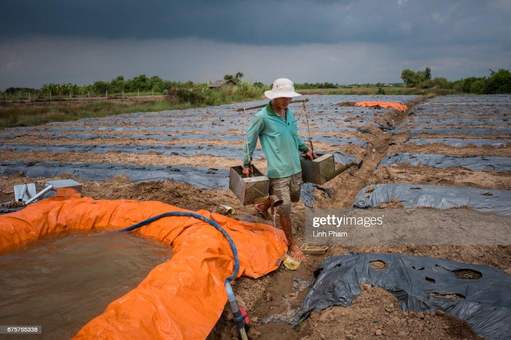 Vietnamese Farmers Livelihood Under Threat With Rising Seas : News Photo