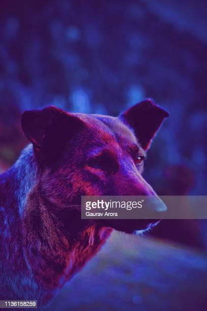 Trance Dog